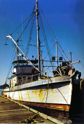 The Alpaca 1 at Prince Rupert in 1997. The vessel was launched as the Alpaca from Shelburne Shipyard in 1927, but spent most of her years on the west coast as the Cooperator 1. (Lonnie Wishart Photo)